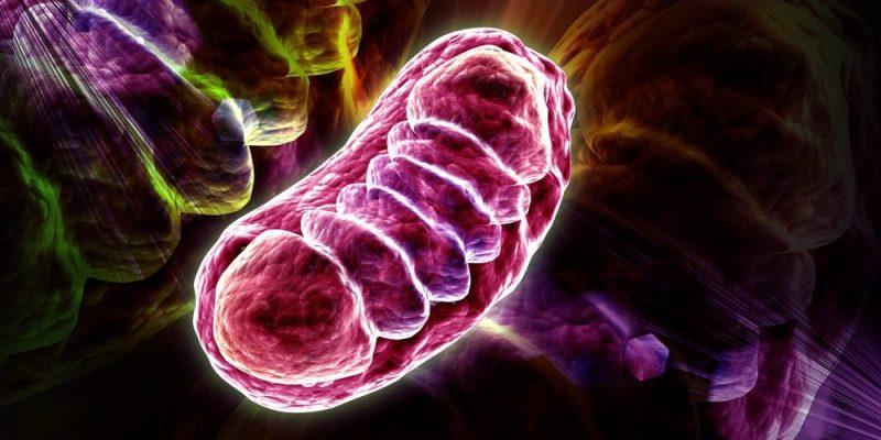 función celular mitocondrial