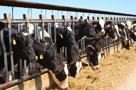 qué es la ganadería