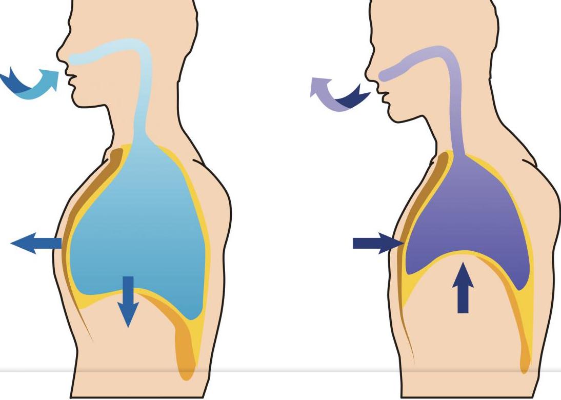 En qué consiste el proceso de respiración